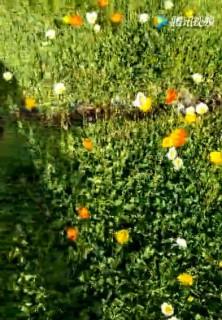 共赢花卉苗木视频